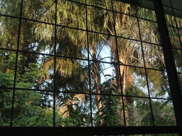 palmeiras- natureza cada da silvia