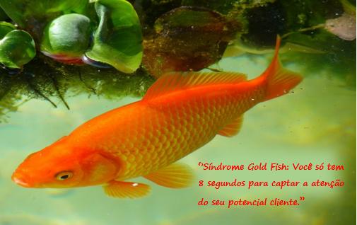 memoria-peixe-marketing-de-conteudo